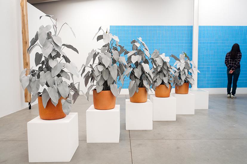 Marlon de Azambuja, Herencia, Escultura viva. Spray gris sobre planta nativa. 2015