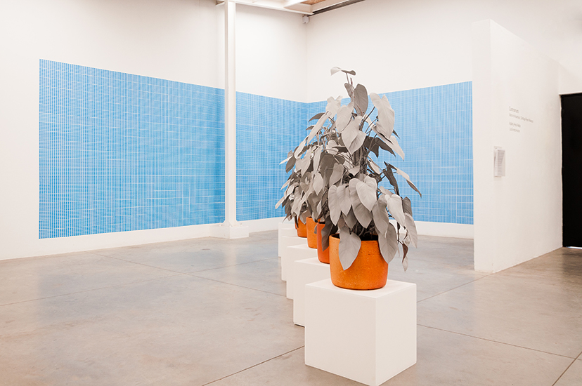 Marlon de Azambuja, Herencia, Escultura viva. Spray gris sobre planta nativa. 2015 y Primavera (Bogotá), Instalación de stickers sobre mural, 2015