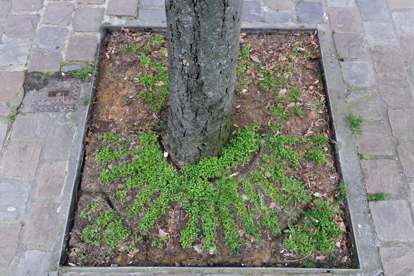 Tree hole of stolen metal grid in the city of Brussels